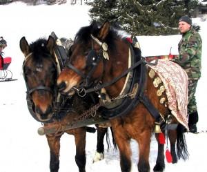 Petrove hucule na VII. ročníku zimných jazdeckých hier Klubu priateľov koní, Bobrovec-Vápenica, 11. február 2006.